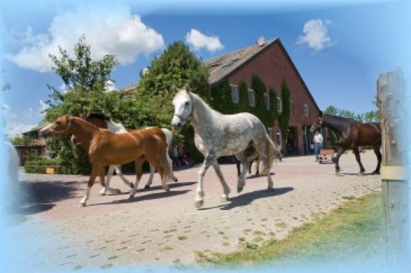Hopezi.de: Traberhof,26434,Hooksiel